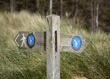 Anglesey Coastal Path sign in Newborough forest