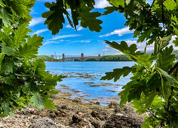 Britannia bridge and Menai Strait through the Oak leaves