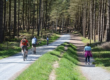 Great walking and cycling through Newborough forest